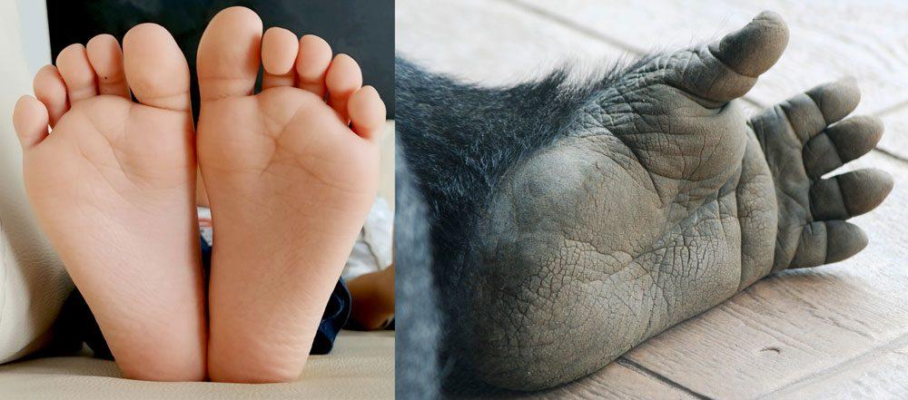 stopy dziecka, stopa goryla, różnice, anatomia stopy, biomechanika stopy