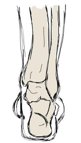 stopa, kość piętowa, ustawienie, ustawienie normalne, heel position, normal position