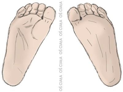 stopy, oś ciała, przywiedzenie, staw skokowo-łódkowaty, foot, talo-navicular joint, adduction of foot, foot adduction